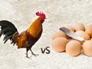 닭이 먼저? 달걀이 먼저?