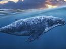누가 고래를 위해 바다로 떠났을까? (상)